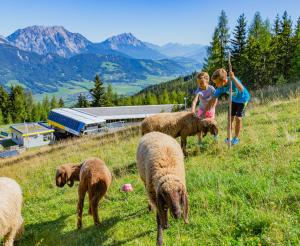 Children with sheep at the Quattralpina valley station