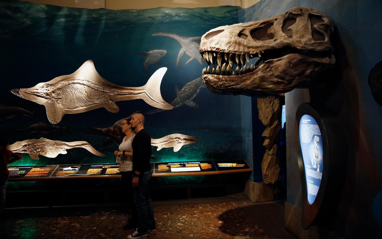 Ausstellungsraum Haus der Natur