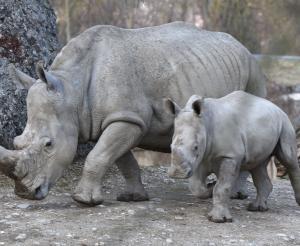 Wildgehege im Zoo Salzburg